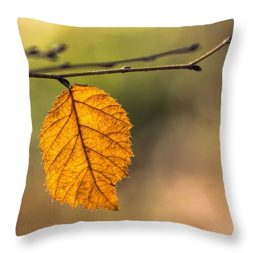 Leaf Throw Pillow featuring the photograph Leaf In Fall Color by Francis Sullivan