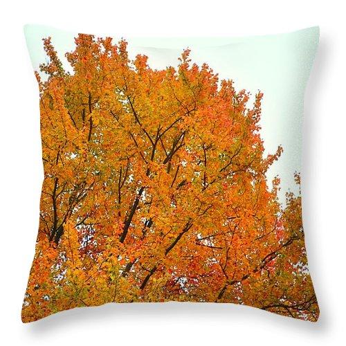 Fall Throw Pillow featuring the photograph Fall Colors 2014-11 by Srinivasan Venkatarajan