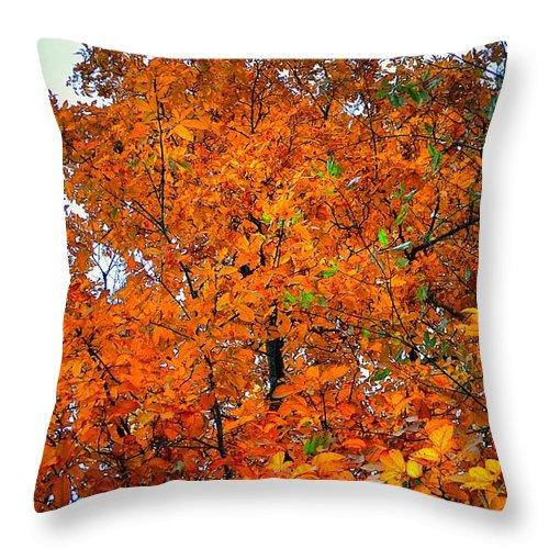 Fall Throw Pillow featuring the photograph Fall Colors 2014 - 14 by Srinivasan Venkatarajan