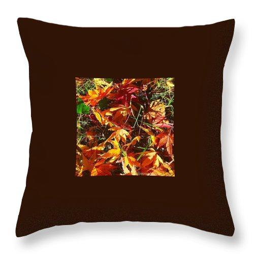 Fall Colors In Annasgardens Throw Pillow featuring the photograph Fall Colors In Annasgardens by Anna Porter