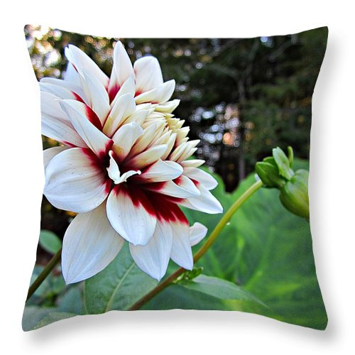 Throw Pillow featuring the photograph Fall Dahlia by MTBobbins Photography
