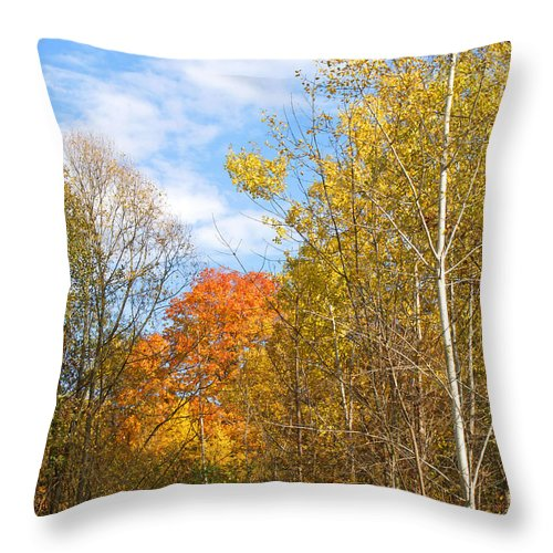 Fall Throw Pillow featuring the photograph Fall Forest by Ann Horn