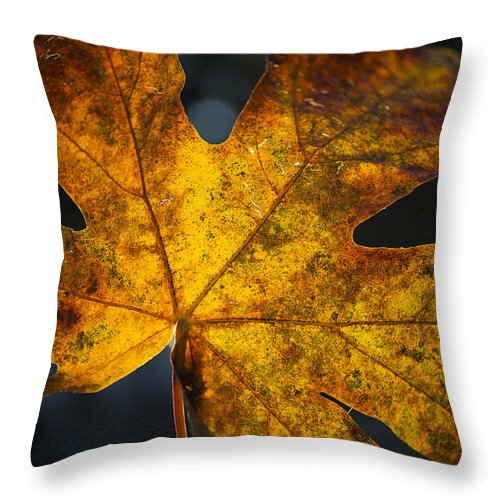 Fall Throw Pillow featuring the photograph Fall Leaf by Charlie Duncan