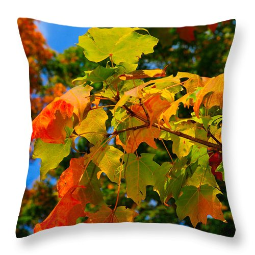 Autumn Throw Pillow featuring the photograph Fall Leaves by Don and Bonnie Fink