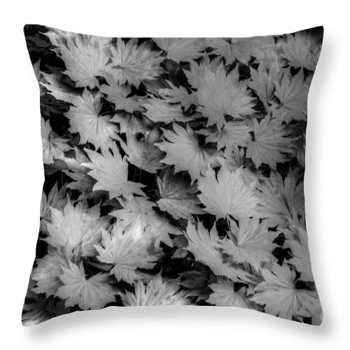 Sunlight Throw Pillow featuring the photograph Fall Leaves by Tap On Photo