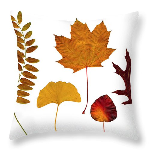 Leaf Throw Pillow featuring the photograph Fall Leaves by Tony Cordoza
