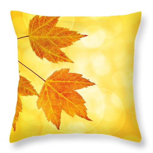 Fall Throw Pillow featuring the photograph Fall Maple Leaves Trio With Bokeh Background by Jit Lim