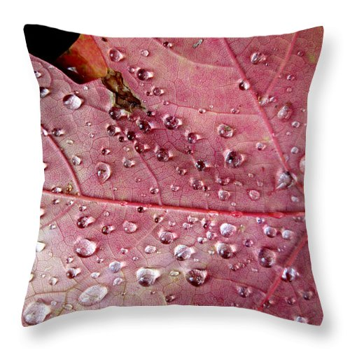 Fall Throw Pillow featuring the photograph Fall St. Louis 8 by Monte Landis