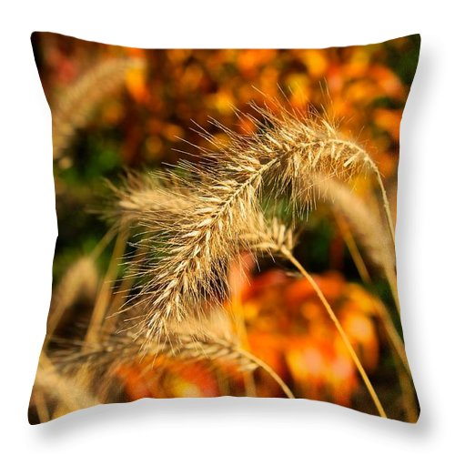 Fall Throw Pillow featuring the photograph Fall by Stacy Shebesta