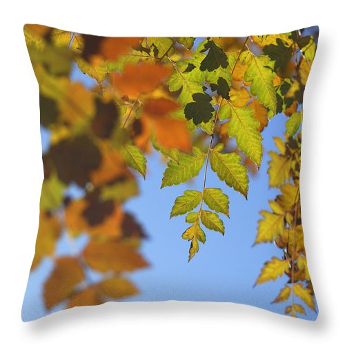 Tree Throw Pillow featuring the photograph Fall Time by Guido Montanes Castillo