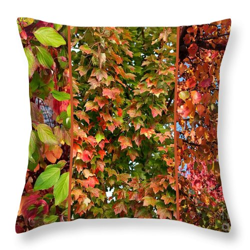 Fall Colors Throw Pillow featuring the photograph Fall Trio Collage by Carol Groenen