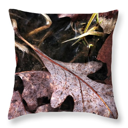 Fallen Leaves Throw Pillow featuring the photograph Fallen Leaves by John Rizzuto