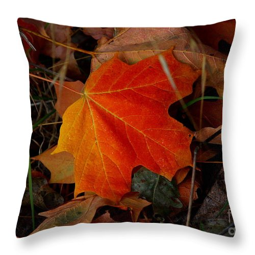 Pipping Throw Pillow featuring the photograph Fallen by Patrick Witz