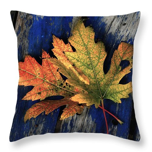 Nature Throw Pillow featuring the photograph Falling For Colour by Linda Sannuti