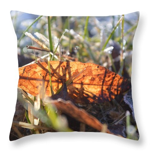 Falling Throw Pillow featuring the photograph Falling For The Light by Brian Boyle