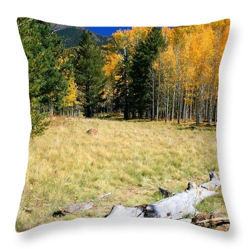 Arizona Throw Pillow featuring the photograph Falling In Flagstaff by Miles Stites