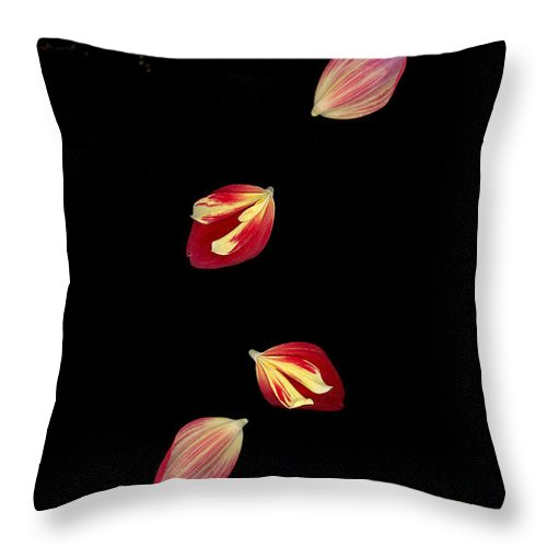 Petal Throw Pillow featuring the photograph Falling by Suzanne Gaff