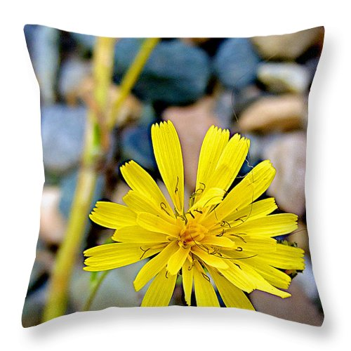 Red Berries Near The River In Five Finger Rapids Recreation Site Along Klondike Highway Throw Pillow featuring the photograph False Dandelion Or Cat's Ear In Five Finger Rapids Recreation Site Along Klondike Hwy-yt by Ruth Hager