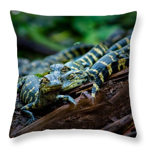 Alligator Throw Pillow featuring the photograph Baby Alligator Selfie by Mark Andrew Thomas