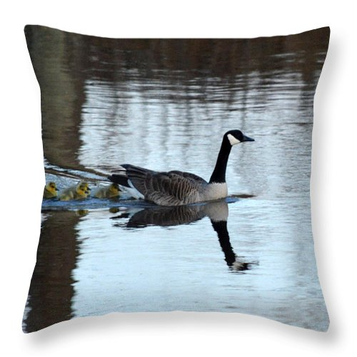 Canadian Geese Throw Pillow featuring the photograph Family by Linda Kerkau