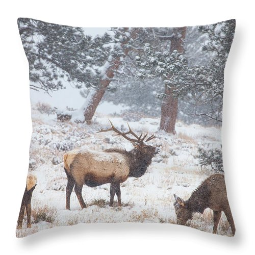 Elk Throw Pillow featuring the photograph Family Man by Darren White
