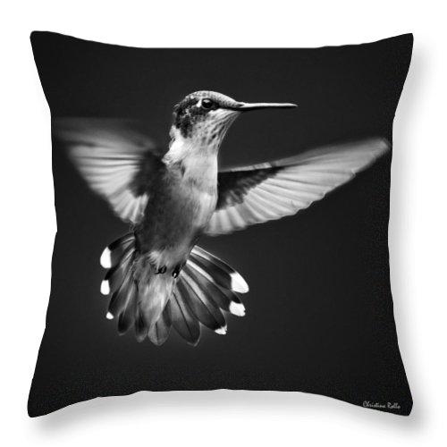 Hummingbird Throw Pillow featuring the photograph Fantail Hummingbird by Christina Rollo