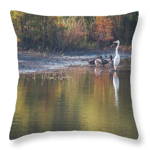 Egret Throw Pillow featuring the photograph Fast Feathered Friends by Suzanne Gaff