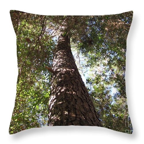 Tree Throw Pillow featuring the photograph Father Pine by Julia Stubbe