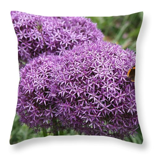 Allium Throw Pillow featuring the photograph Favorite Butterfly Spot by Christiane Schulze Art And Photography