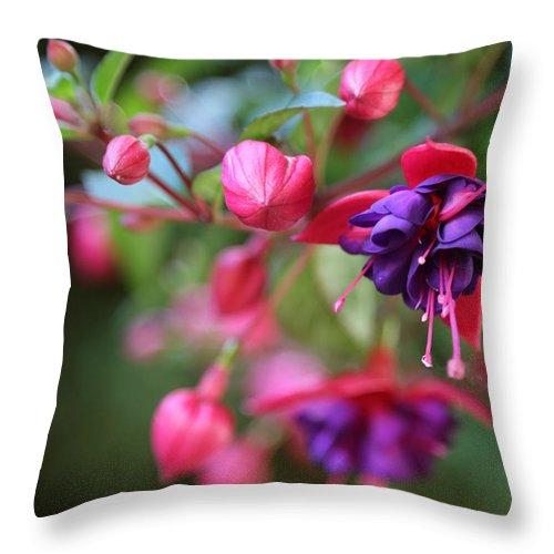 Fuchsia Throw Pillow featuring the photograph Favorite Fuchsia by Carol Groenen