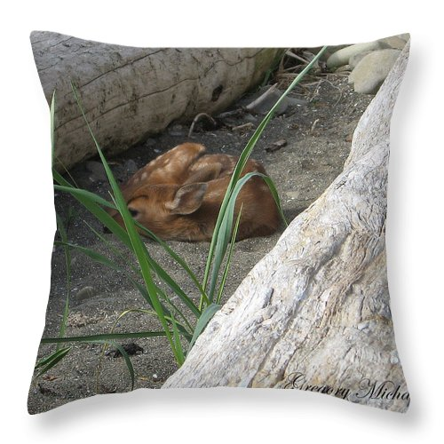 Fawn Resting On Beach Throw Pillow featuring the photograph Fawn Resting On Beach by Safe Haven Photography Northwest