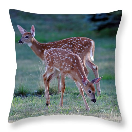 Fawn Throw Pillow featuring the photograph Fawn Twins by Lloyd Alexander