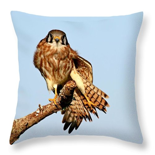 Falcon Throw Pillow featuring the photograph Feather Display by Ira Runyan