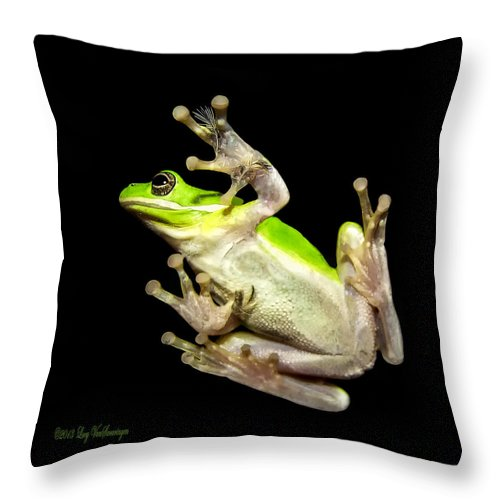 Feather Throw Pillow featuring the photograph Feathered Frog by Lucy VanSwearingen