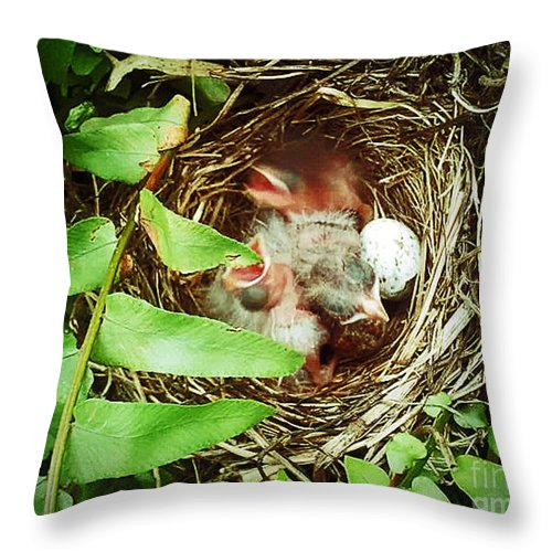 Baby Throw Pillow featuring the photograph Feeding Time by Katherine Williams
