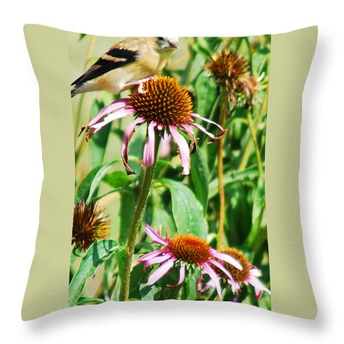 American Gold Finch Throw Pillow featuring the photograph Female American Gold Finch by Optical Playground By MP Ray