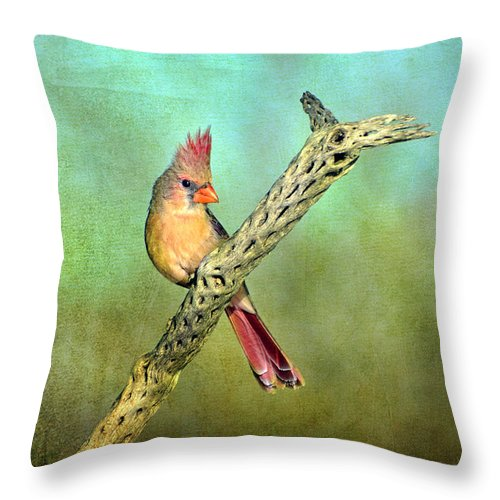 Birds Throw Pillow featuring the photograph Female Cardinal by Barbara Manis