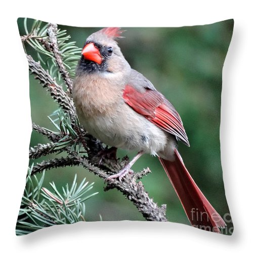Cardinal Throw Pillow featuring the photograph Ohio Female Cardinal by Gena Weiser