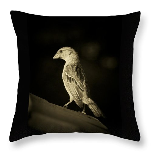 Finch Throw Pillow featuring the photograph Female House Finch by Susan McMenamin