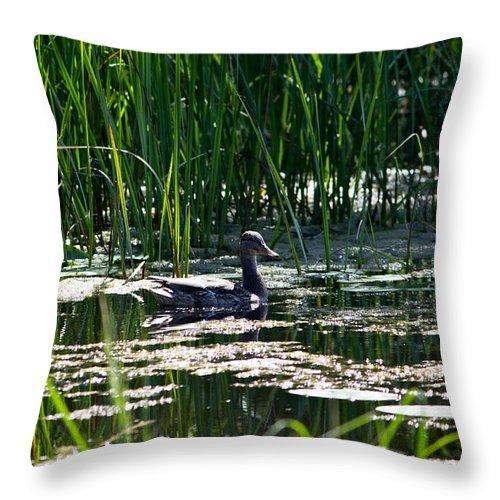 Mallard Throw Pillow featuring the photograph Female Mallard Duck Swimming by Ms Judi