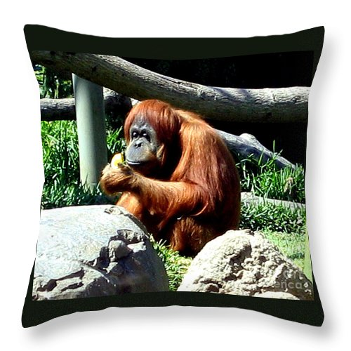 Animal Throw Pillow featuring the photograph Female Orangutan-san Diego by Jay Milo