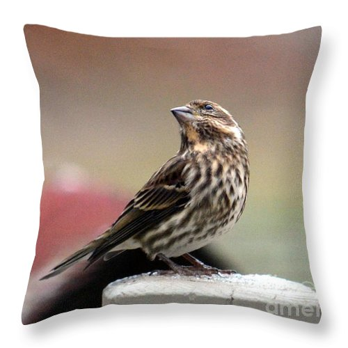 Bird Throw Pillow featuring the photograph Patiently Waiting by Jaunine Roberts