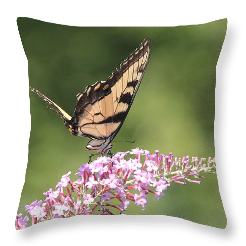 Sooc Throw Pillow featuring the photograph Female Tiger Butterly-1-featured In Macro-comfortable Art And Newbies Groups by Ericamaxine Price