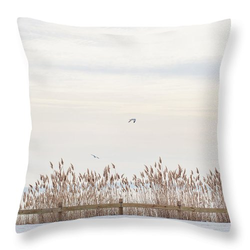 Seagulls Throw Pillow featuring the photograph Fenced In by June Marie Sobrito