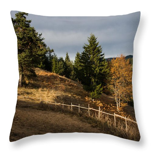 Forest Throw Pillow featuring the photograph Fenced In Warm Autumn Light by Georgia Mizuleva