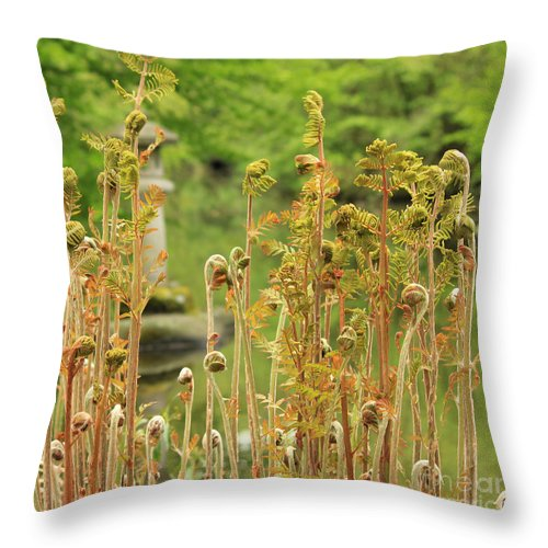 Fern Throw Pillow featuring the photograph Fern In Its Growing Beauty II by Four Hands Art