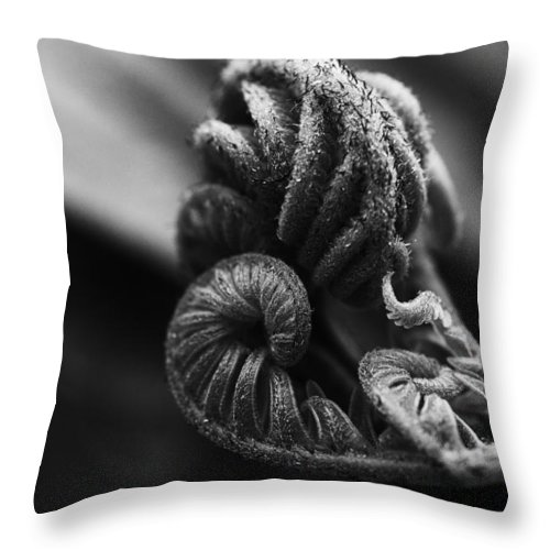 Abstract Throw Pillow featuring the photograph Fern by Joel Bourgoin