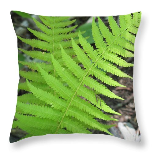 Nature Throw Pillow featuring the photograph Ferns by Anita Adams
