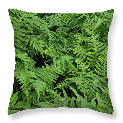 Ferns Throw Pillow featuring the photograph D3b6327-ferns In Sonoma by Ed Cooper Photography