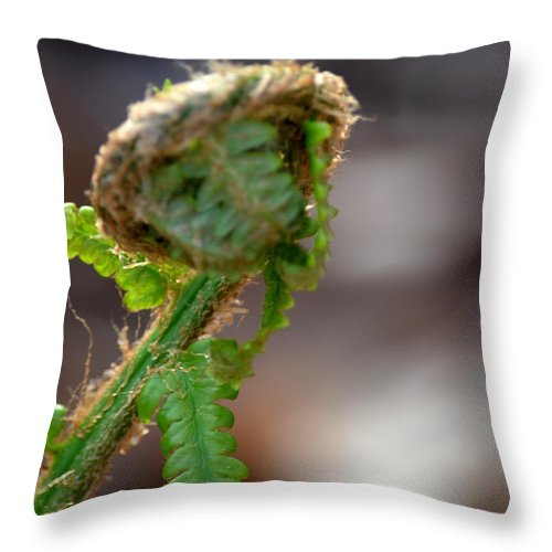 Fiddlehead 2 Throw Pillow featuring the photograph Fiddlehead 2 by Maria Urso